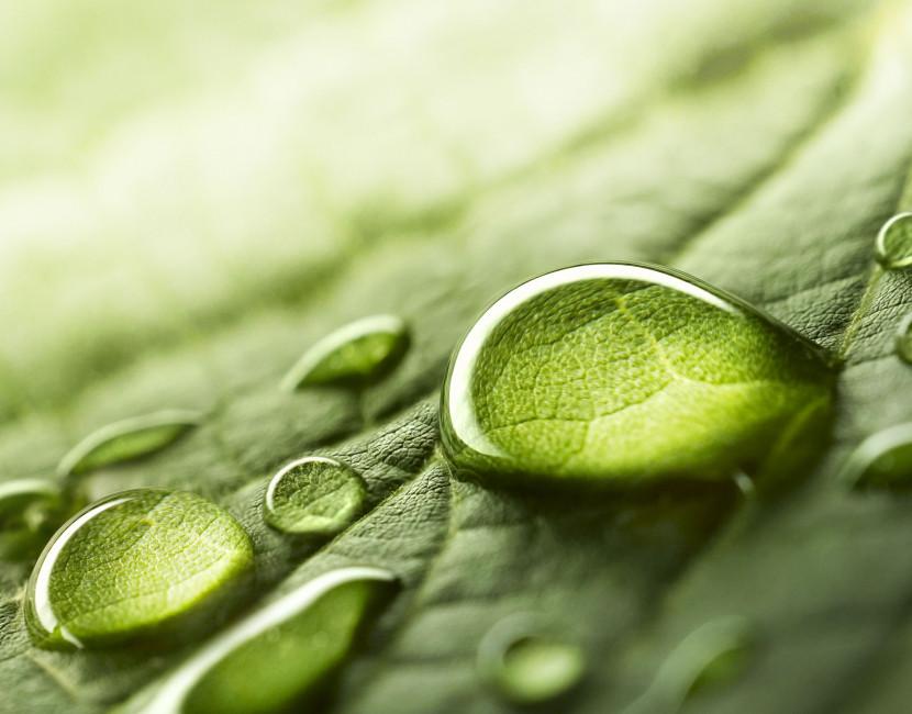 Efficacité et écologie